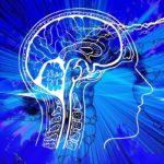 Que peut-on faire pour conserver nos cerveaux ?