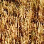 La loi alimentation comme aliénation du monde agricole